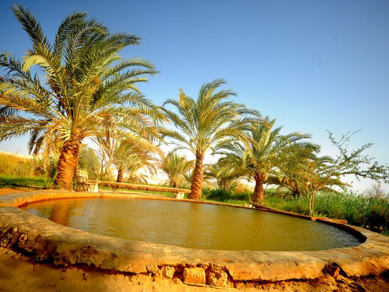 Siwa Oasis Tour from Cairo | Siwa Oasis Desert Safari