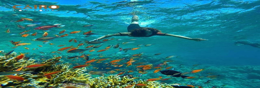 Hurghada Snorkeling Trip from Safaga Port | Snorkeling Tours Safaga Port