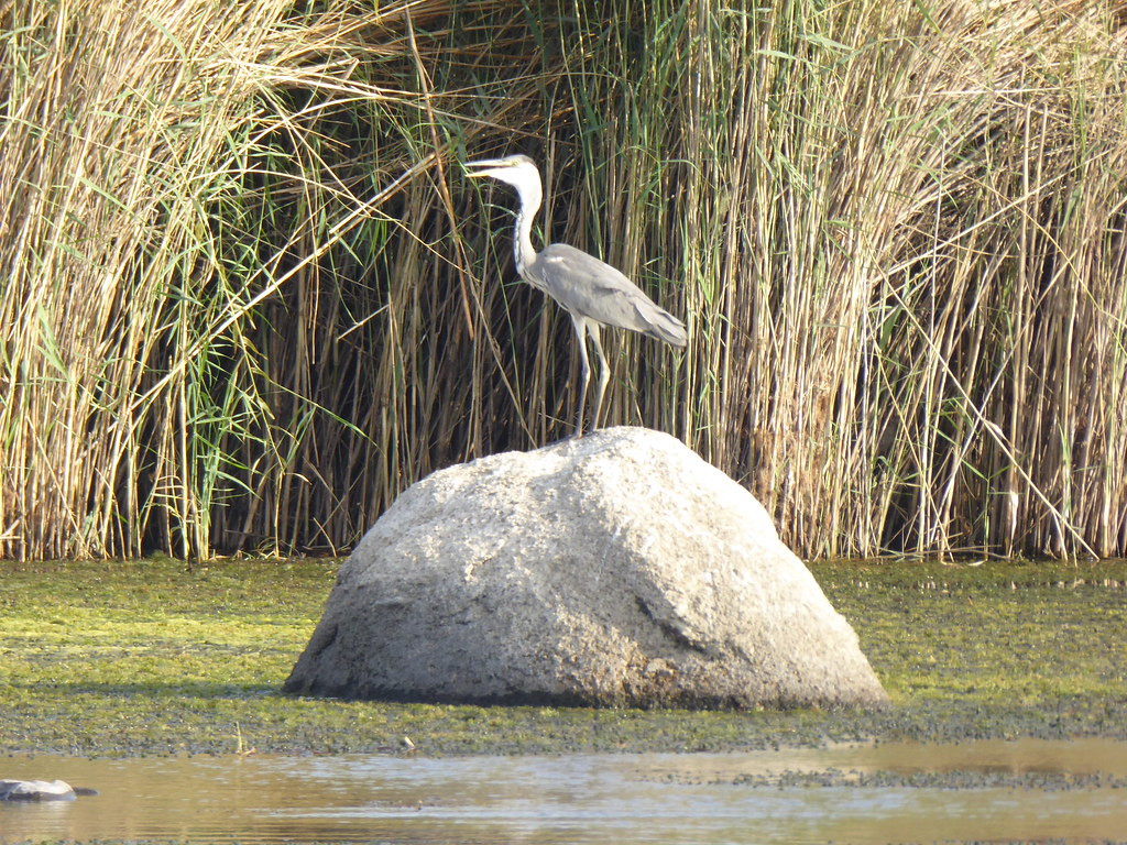 Bird Watching Tour in Aswan | Kitchener's Island and Agha Khan