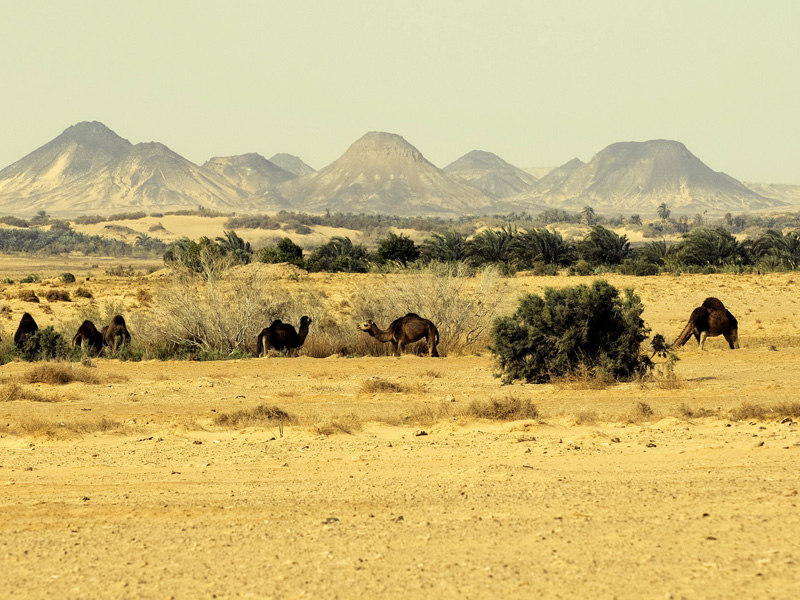 Desert Safari Trip to Gara Cave 5 days 4 nights