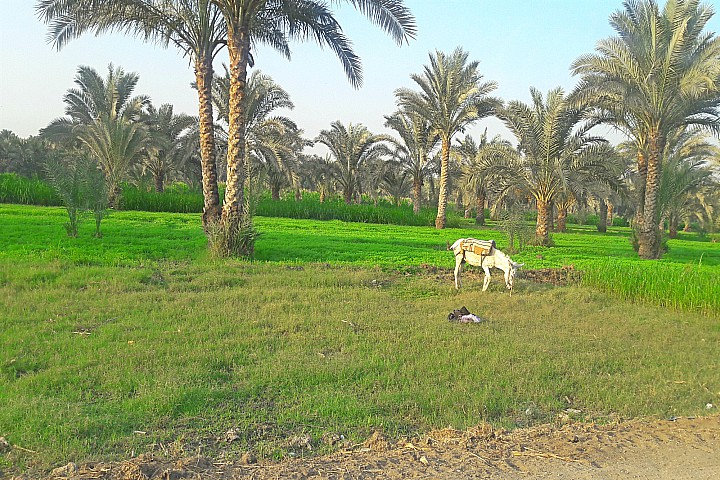 Egypt Countryside Trip | Egypt Countryside Tours