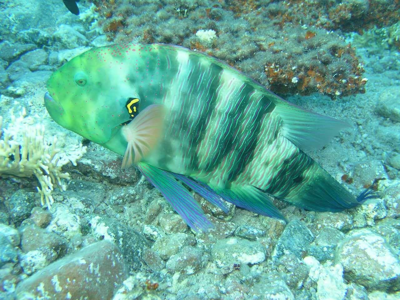 Snorkeling trip to Mahmya Island Hurghada