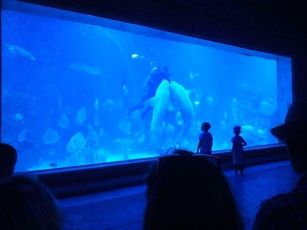 Hurghada Grand Aquarium Entrance Ticket   Hurghada Aquarium Prices